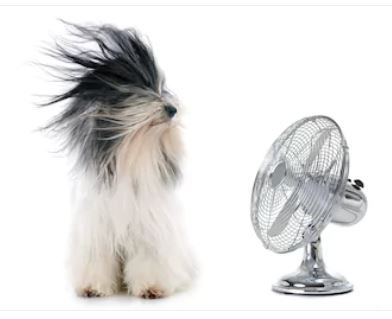 Dog keeping cool in front of fan